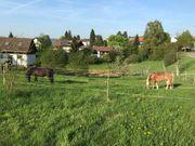Offenstall Platz für leichtfuttriges Pony