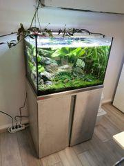 Eheim Proxima 175l Kombination Aquarium