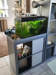 Garnelen Aquarium 54 l mit
