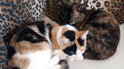 2 sechsmonatigen Kätzchen suchen ein