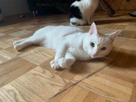 Tierschutzvereine, -heime - Zuhause für Anastasia und Olga