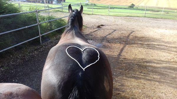 Platz fuer Pferd Pony