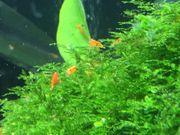 Angebot Garnelen orange