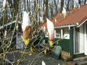 Chalet in Holland zu verkaufen