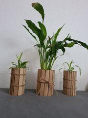 Grünlilien und einblatt Ableger ab