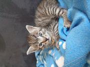 Baby katzen kitten