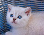 Links Point mit blauen Augen