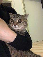 meine süße Katze