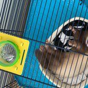 Frettchen sucht neues Zuhause