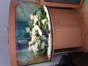 Seewassereckaquarium