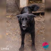 Limba - Braucht Zeit und Vertrauen