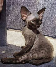 Ein junges Katzen sucht ein