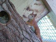 Eichhörnchen Bock aus April 2021