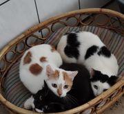 kater und katzen abzugeben