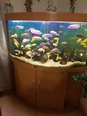 Eckaquarium von Juwel 350 Liter