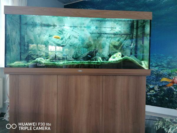 Aquarium mit Fischen