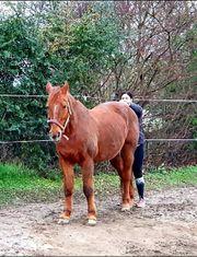 Ihr Pferd hat ein Problem