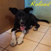 Welpe Roland sucht ein Zuhause