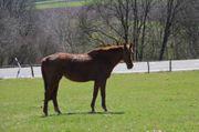 Pferde Patenschaften für 20 jährige