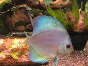 Suche Aquarienfische