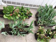 Blumenkasten bepflanzt