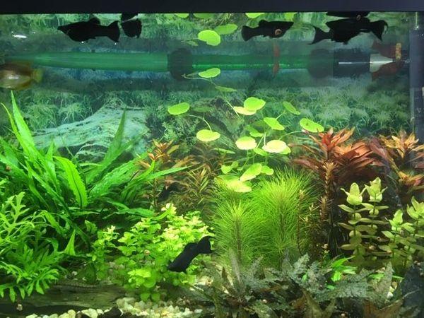 Aquarium komplett mit Fischen und viel Zubehör - Berlin Neukölln - Aquaristik: Aquarium, Aquariumbeleuchtung, Aquariumpflanzen, Aquariumpumpe, Aquariumzubehör, Außenfilter, Fischfutter. Aquarium 100 Liter mit 10 Fischen komplett mit 2 Kisten Zubehör wegen Hobbyauflößung zu verkaufen.Bin an den Rol - Berlin Neukölln