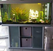 Aquarium 630l komplett neue LED-Beleuchtung
