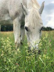 Stall Stalltrakt für Pferdehaltung gesucht