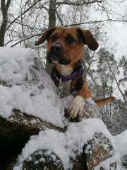 Chihuahua gesucht