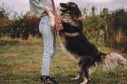 BOND - Herdenschutzhund Mix - ruhig und