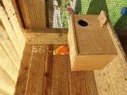 Suche 2 Schönsittich Hennen