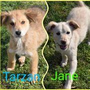 Welpen Kinder Tarzan und Jane