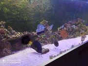 Meerwasseraquarium Komplettset mit Tieren und