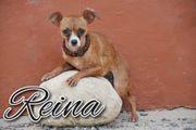 Gehen Sie gemeinsam mit Reina