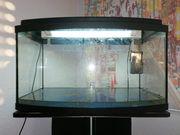Schnäppchen Schönes Aquarium