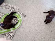Leni und Lina - Tierschutzkatzen suchen
