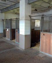 Freie Pferdeboxen