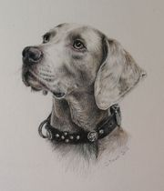 Tierportrait Portraitzeichnung Portrait nach Fotovorlage