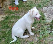 Die zuckersüße Yeta sucht ein