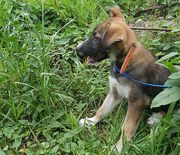 Tierschutzhund - Andrew -