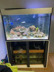 Meerwasseraquarium Technik Besatz