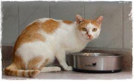 Katzen - Kater Apricot sucht Zuhause zu