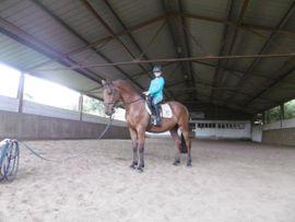 Pferde - 8-jähriger OS-Wallach von Landry - Ricardo -