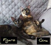 Gina und Figaro ein verspieltes