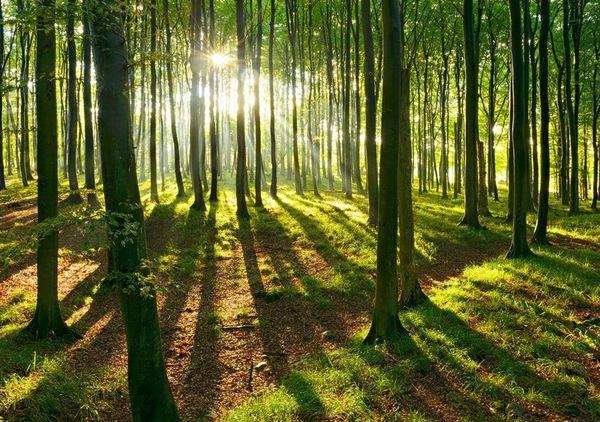 Wald Waldgrundstück im Grossraum Feldkirch