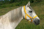 Pferdepflege Stallhilfe Aushilfstätigkeit für 6