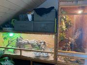 Terrarium für Reptilien