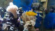 alles 5 euro weich koralle