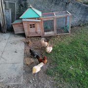 Stall Hühnerstall Wachtelstall