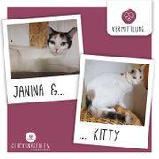 Katzen Janina und Kitty suchen